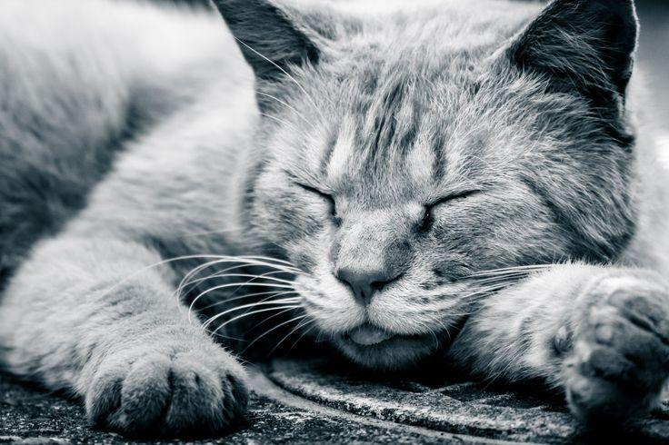 寝る前にやってはいけない3つのこと | PHRONESIS