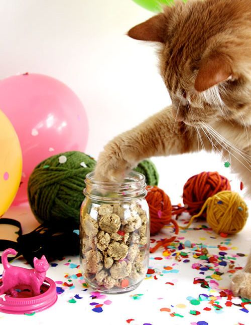 crunchy-cat-treats-DS4