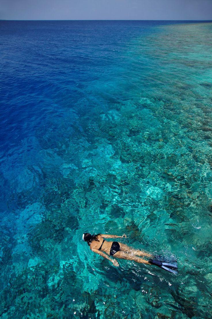 Fish tank kings a snorkelers dream - Snorkeling Maldives Soundfreaq Chromatics Summer