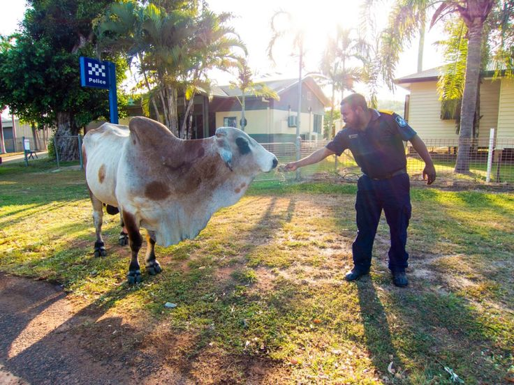 No 'bull' about it, its time to moove on.