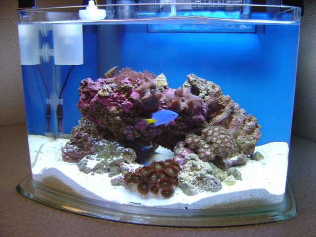 23 Best Images About Nano Reefs On Pinterest Sump