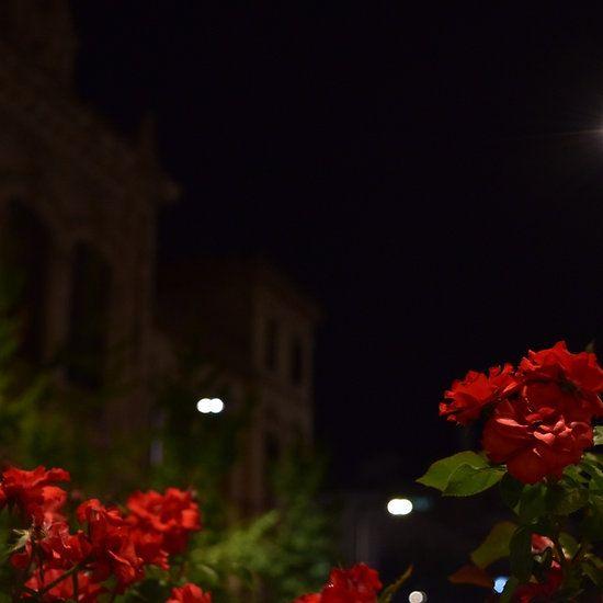 roses under lights