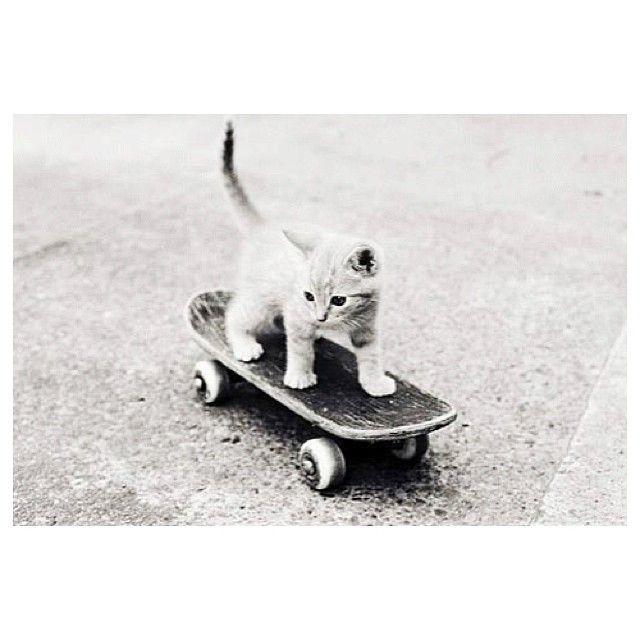 Skateboarding kitten!