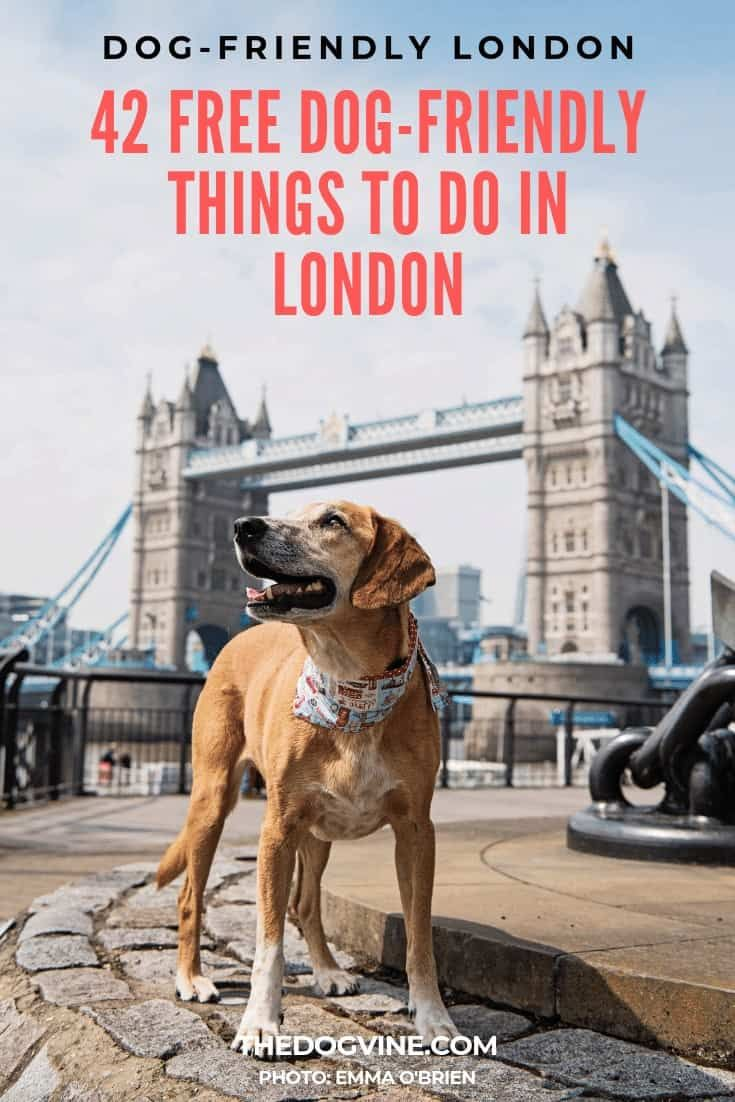 42 Free Dog Friendly Things To Do In London Dog Friends Dog Friendly Vacation