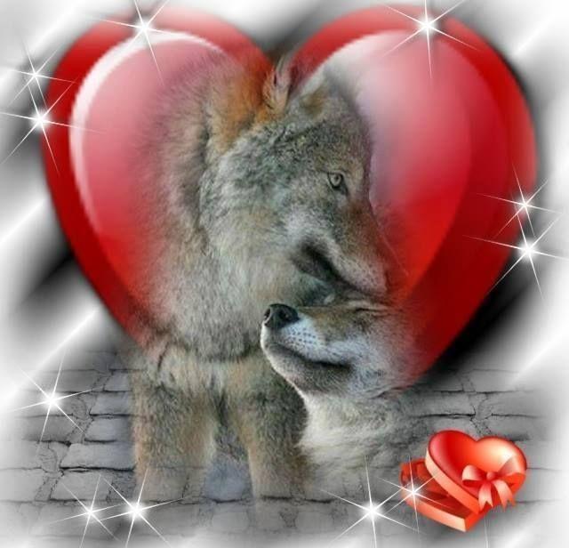 Resultado de imagem para valentine's day + wolves