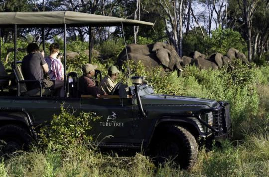 On a game drive at Tubu Tree Camp (Okavango Delta, Botswana). If that looks like a place you would like to visit - just let us know: info@gondwanatoursandsafaris.com