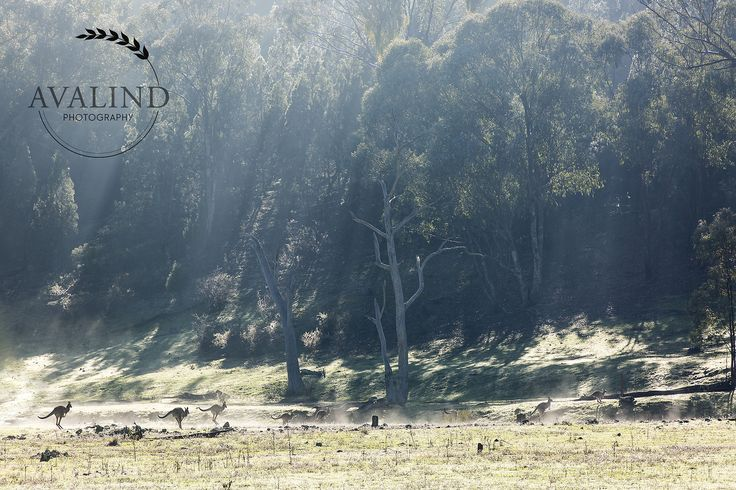 Just as the morning fog is lifting in Nangar National Park.