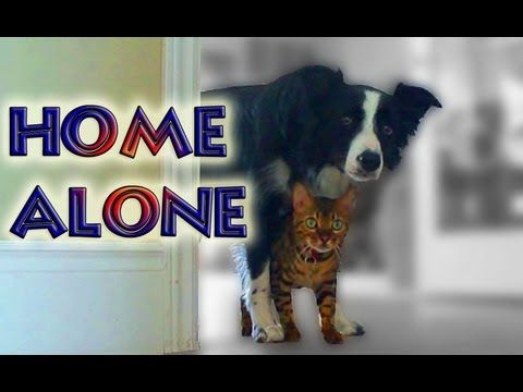 """is the dog or cat better Dogs are better look at the cat in """"cats aren't afraid of anything"""" gif the cat just attacks the innocent senior dog when he's just trying to rest."""