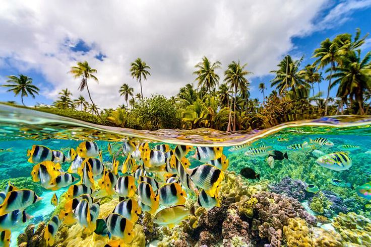 The underwater life in French Polynesia. Photo by © Chris McLennan. http://cmphoto.co.nz