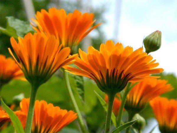 Segítünk, hogy egészséges legyen! - http://domonyi.aries.hu