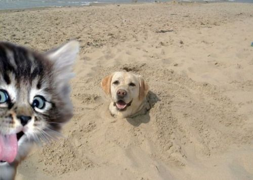 Best Photobomb Images On Pinterest Adorable Animals Brother - 20 hilarious cat photobombs