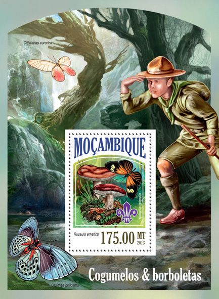 MOZ 13527 bMushrooms and butterflies, (Russula emetic, Heliconius xasnthocles, scouts).
