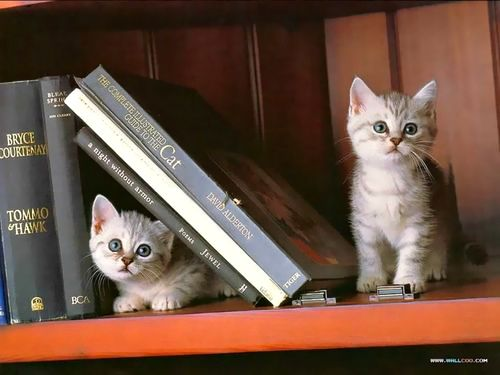 Kittens with books: does it get any cuter than this?!