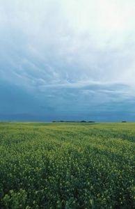How to Plant Alfalfa Hay Seeds thumbnail