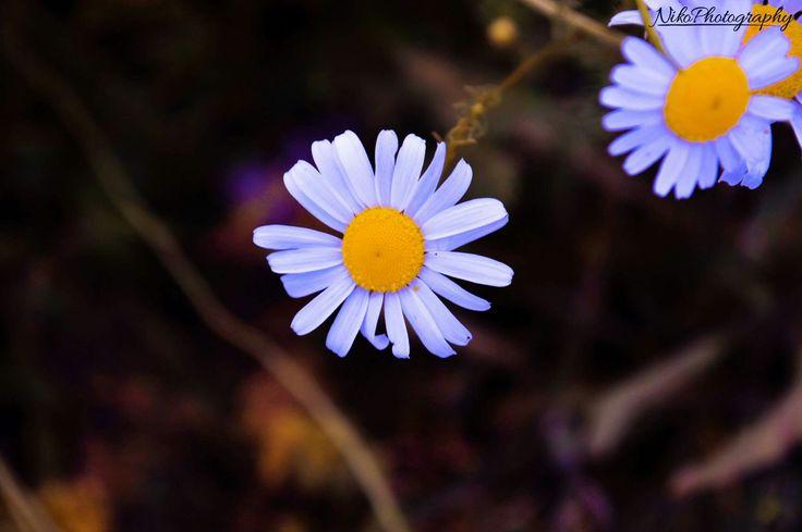 Flower #photography#flower#photoshop