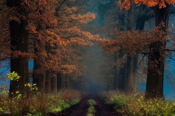 Os bosques outonais oníricos de um fotógrafo tcheco 13