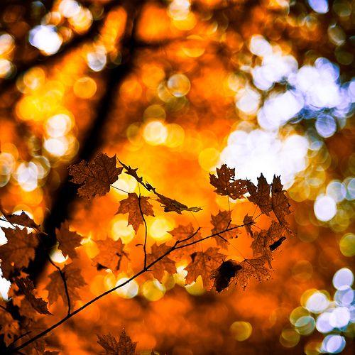 #autumn #leaf #sunny: