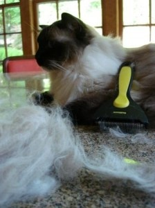 ShedMonster Cat Shedding Tool – Floppycats.com Product Review