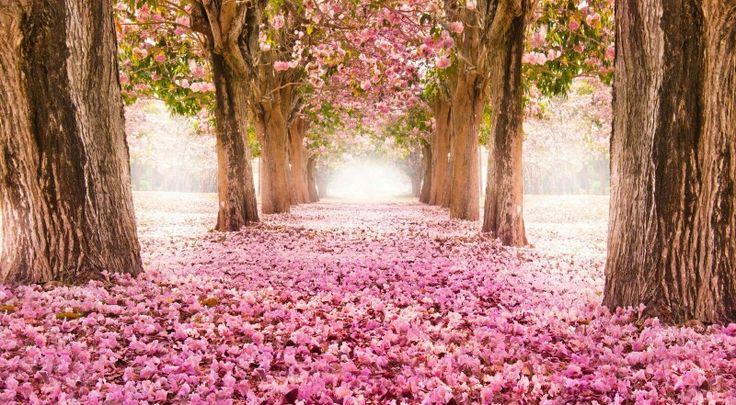 Sendero rosa
