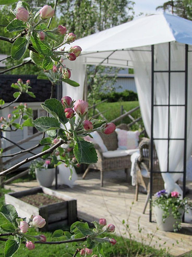 Paviljonki ja omenankukat