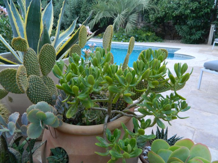 Succulents in strawberry pots.