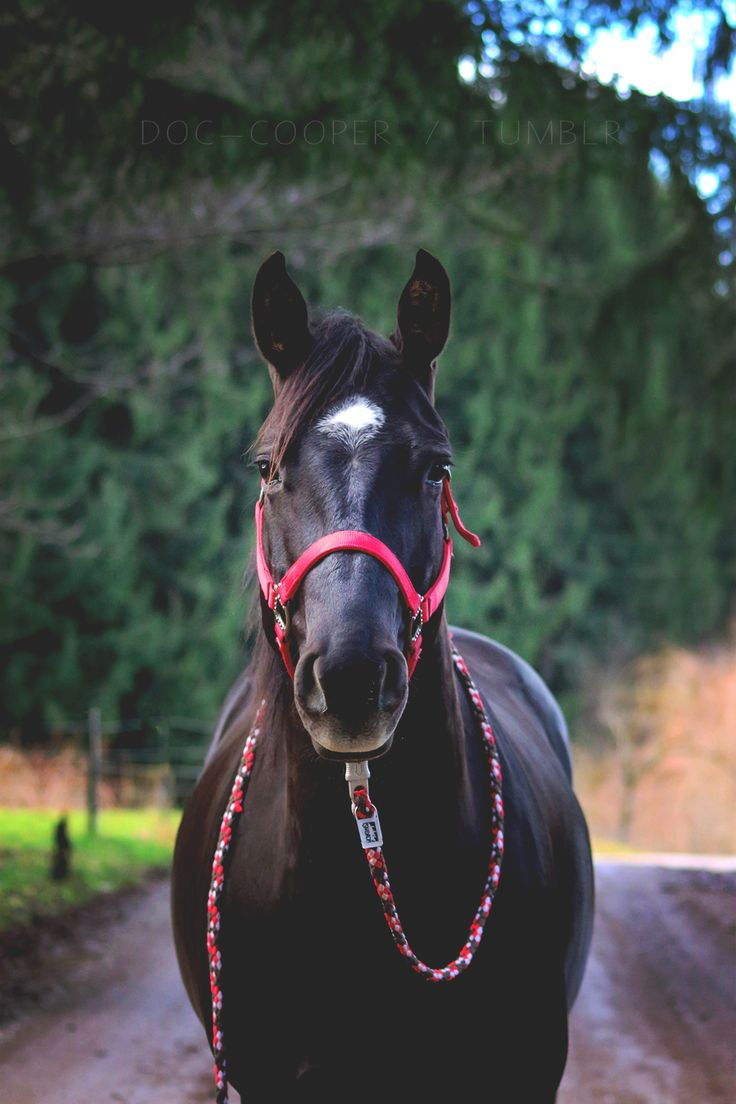 Find This Pin And More On Horses