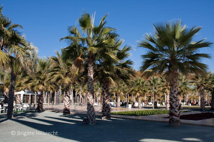 #Málaga #Port El Palmeral de la Sorpresa  All places of interest you'll find here: http://www.amazon.co.uk/M%C3%A1laga-Capital-Coast-Brigitte-Hilbrecht/dp/1517300533/ref=sr_1_1?s=books&ie=UTF8&qid=1456574193&sr=1-1&keywords=malaga