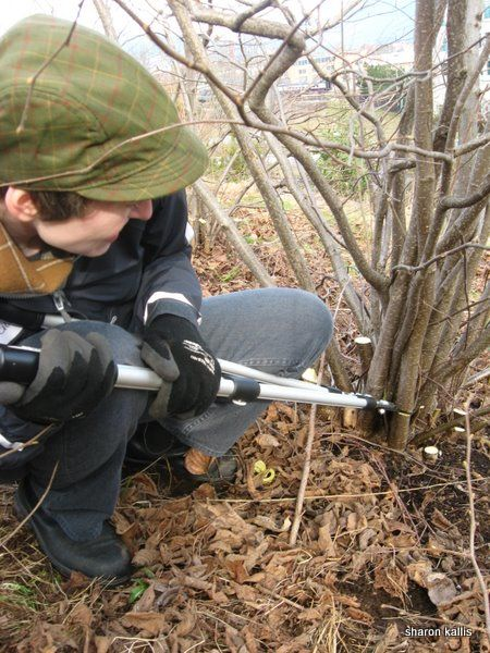 Hazel wood: Coppicing (sustainable harvesting) and weaving | Sharon Kallis