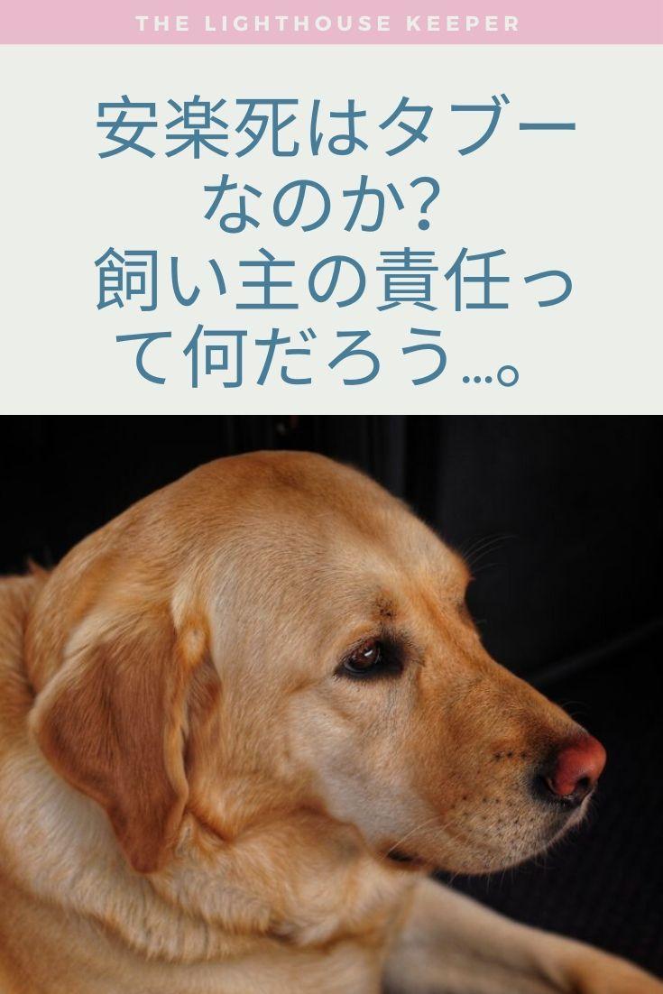 安楽死という選択 愛するペットの最期を考える ペット 犬 ラブラドール