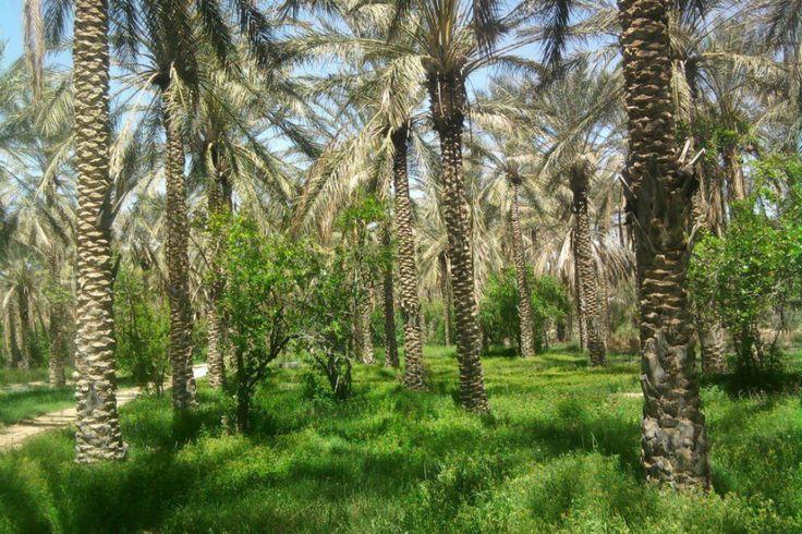 Woestijnlandschappen wisselen zich af met groene gordels gevuld met palmbomen. Vakantiegevoel gegarandeerd!