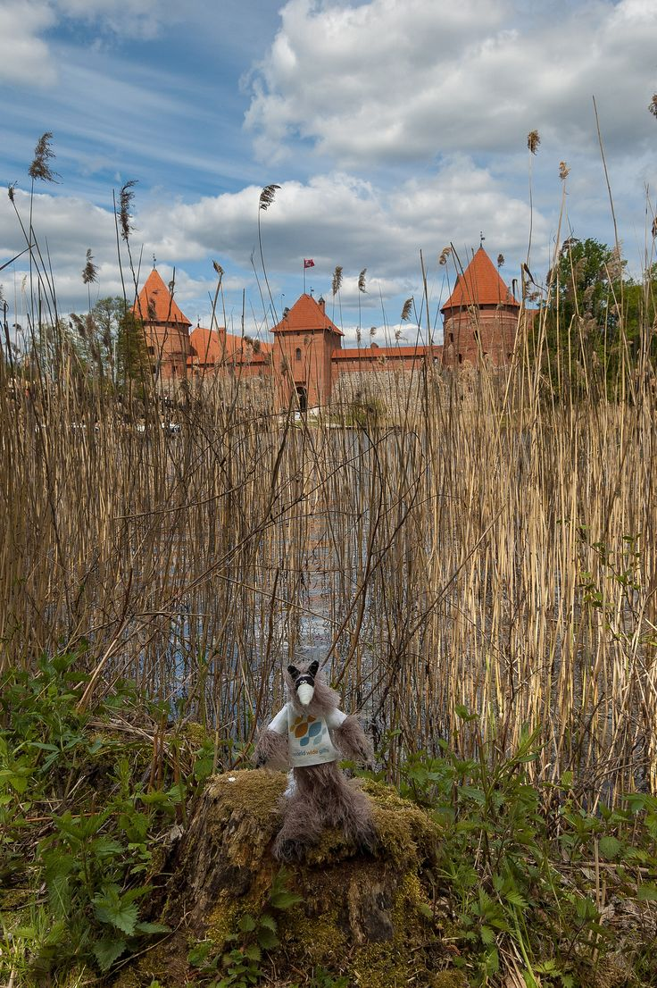 https://flic.kr/p/nsBwRG | Baltic Trip of Raccoon Pedro | Lithuania | Trakai Island Castle | Baltic Trip 2014. Photo by World Wide Gifts (www.world-wide-gifts.com). See more about Raccoon Pedro's travelling at instagram.com/worldwide_souvenirs/