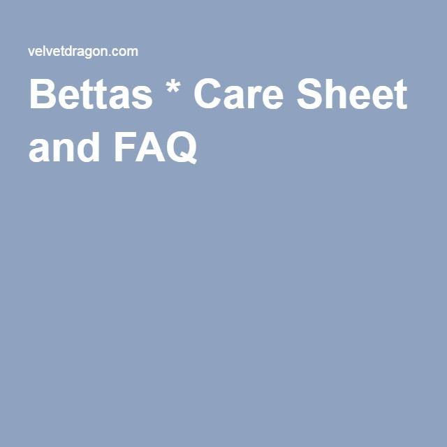 65 best images about aquarium betta fish on pinterest for Betta fish care sheet