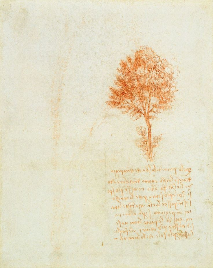 A tree  Leonardo da Vinci (Vinci 1452-Amboise 1519)   #TuscanyAgriturismoGiratola