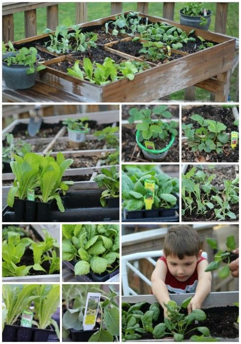 Table Gardening is a fantastic way to grow your own vegetables, check out my tips on how to do it.