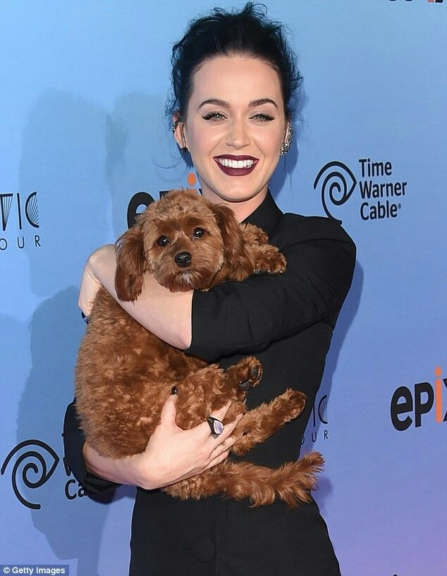 Well, she was the canine star: The Roar singer took Butters along for a screening of Epix's Katy Perry: The Prismatic World Tour on March 26. The pooch is the tour's mascot