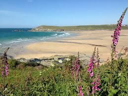 Image result for sea thrift in cornwall