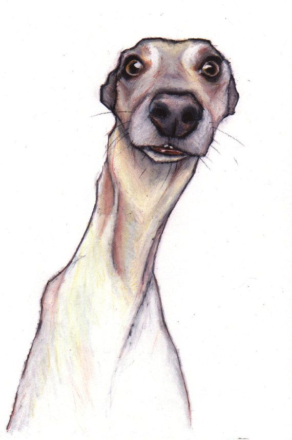 WHIPPET ART. I just love goofy whippets!!!This one is a limited edition giclee print from an original colour pencil drawing. To order a print, or custom whippet art please click the link... https://www.etsy.com/listing/214403187/whippet-art-print-whippet-art-images?utm_source=Pinterest&utm_medium=PageTools&utm_campaign=Share