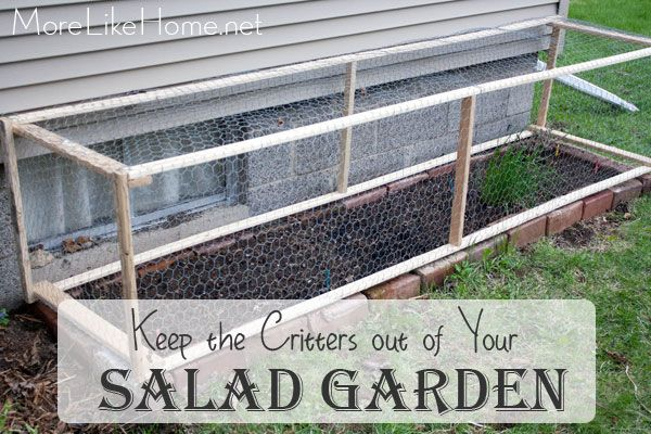 1000 Images About Garden Garden On Pinterest Gardens Window Boxes And Garlic Chives
