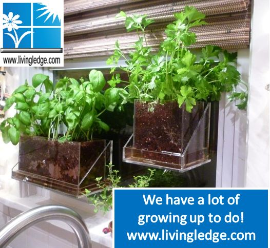 Vertical / Urban Garden Solutions. Do You Have A Lot Of Growing Up To Do