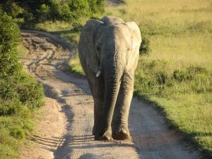 Our recommendations on finding a safari or game reserve in Malaria-free areas of South Africa: http://www.where2stay-southafrica.com/blog/safari-2/malariafree-safari-south-africa