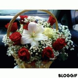 Flores para ti mi amor