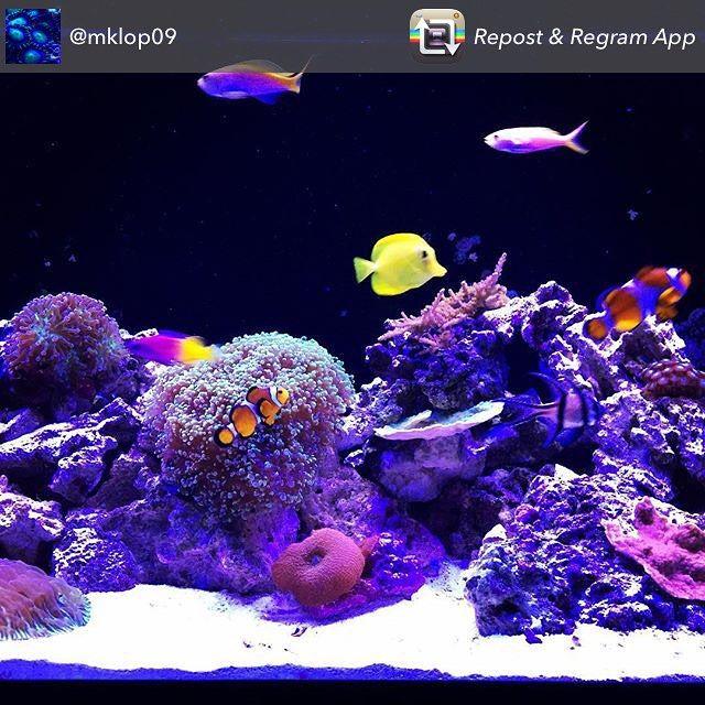 Thank you @mklop09 for sharing your #reeftank! #swfishgeekgrandrapids #showusyourtanks