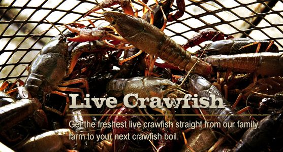 Freshest live crawfish strait from the farm to your door!!!!