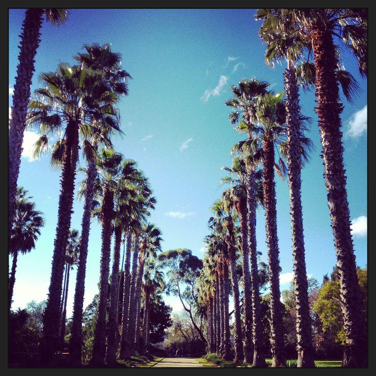 Williamstown - Botanical Gardens