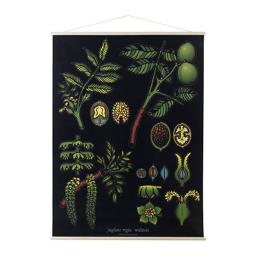 1000 Images About Biology Posters Vintage On Pinterest
