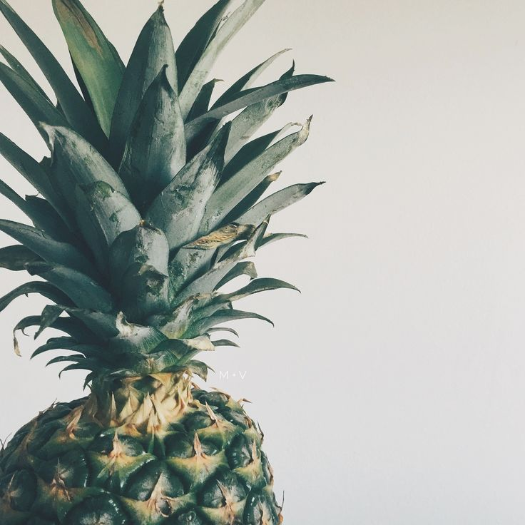 Did you know… Pineapple juice is 500% more effective in stopping coughing than cough syrup is. Fresh pineapples contain a substance known as Bromelain, a specific type of enzyme with anti-inflammatory properties which can combat infections and eradicate bacteria. Drink to your health! #pineapple #elixir #naturalmedicine #holistichealth #naturalremedies #pineapplejuice #coughremedy