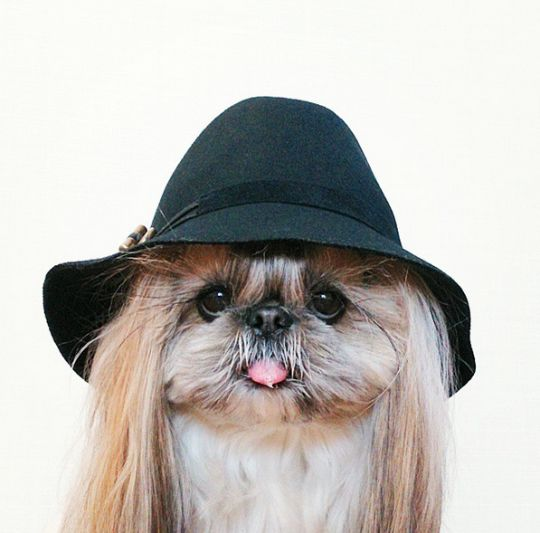 Our latest #HairGoals are all thanks to this Instagram-famous dog, Kuma - Fashion and lifestyle News - Yahoo Style Canada
