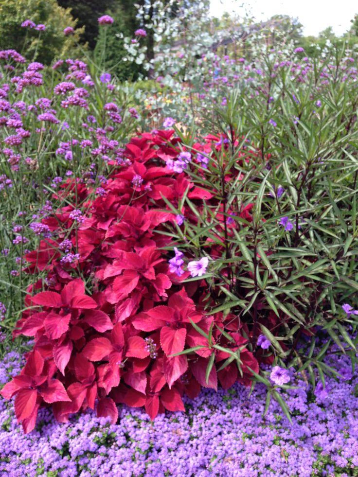 NGB Year of the Coleus Beautiful color display at Cantigny Sun PlantsExotic PlantsShade PlantsGarden PlantsGardening TipsContainer