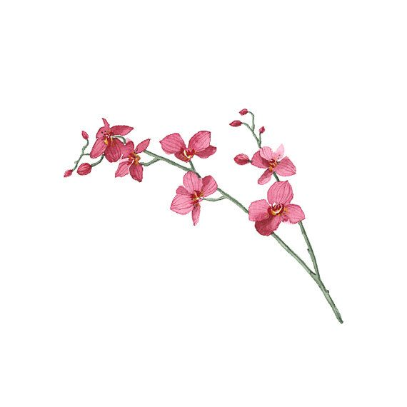 Watercolor Orchid Temporary Tattoo wrist ankle body by ArrowTattoo