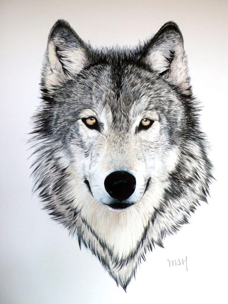 Grijze wolf met felgele ogen.